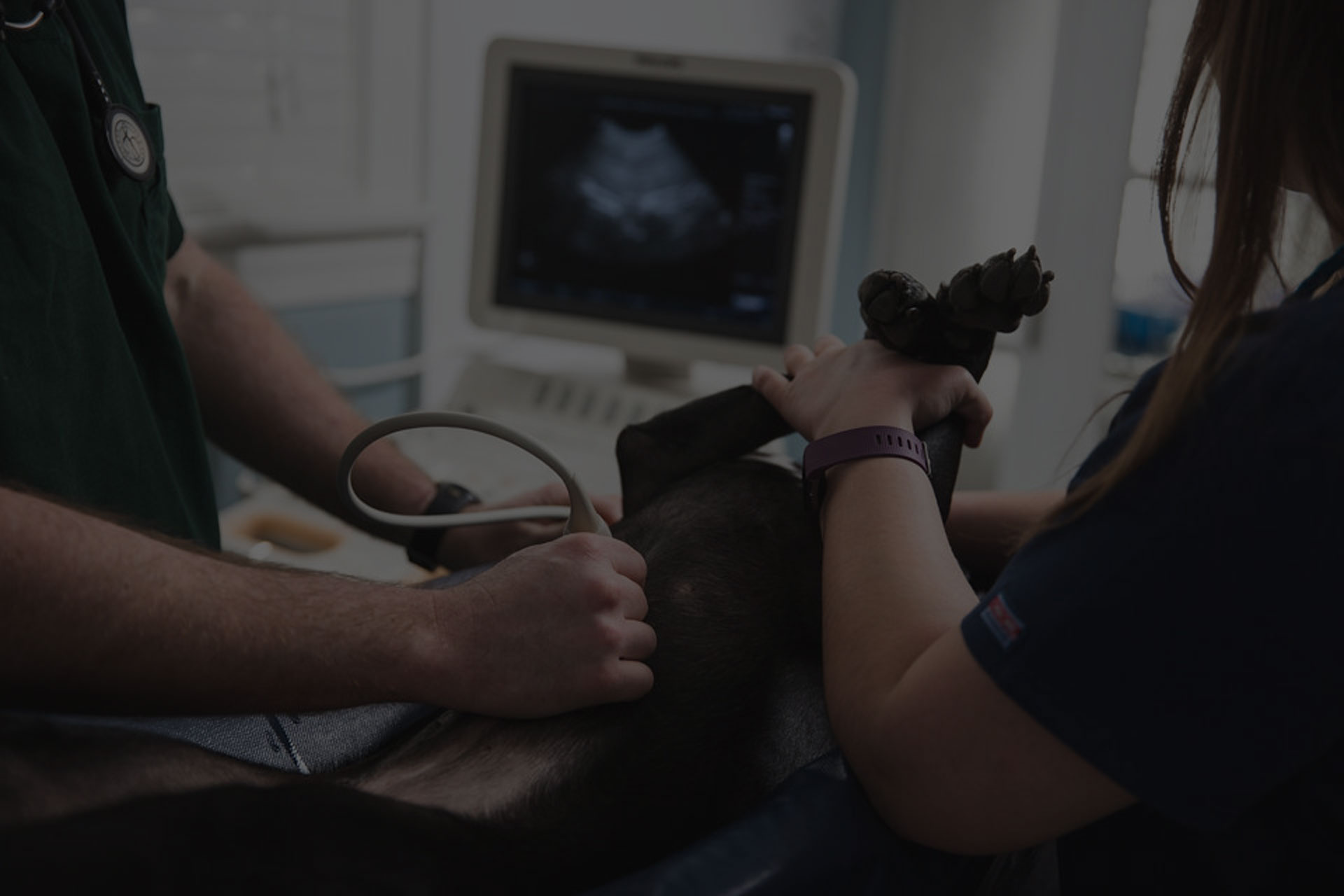 Technician performing ultrasound on dog